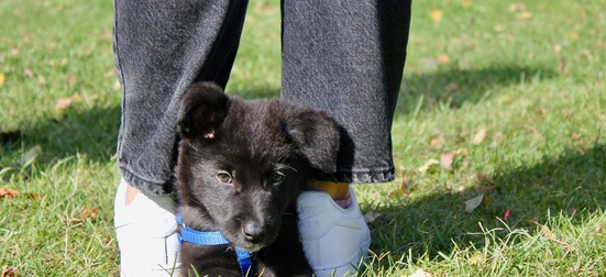 Foster a homeless puppy for a little while until adopters are found