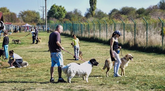Walk a dog from the 1500 Dog Gang in the municpal shelter near Sofia