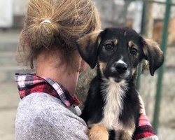 Volunteer at the puppy shelter in Slatina