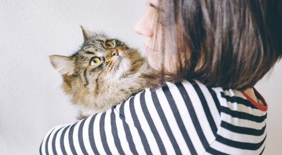Резултат с изображение за гушкане на коте
